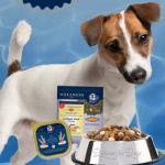 kostenlose Hundefutterprobe