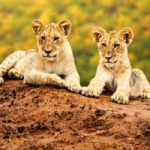 Reise nach Namibia gewinnen